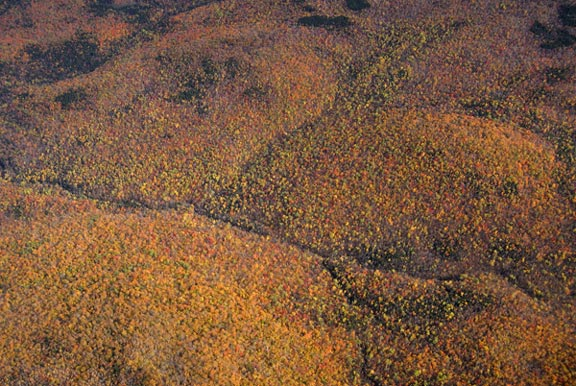Autumn transforms the plantlife of the White Mountain National Forest from green to red and yellow.