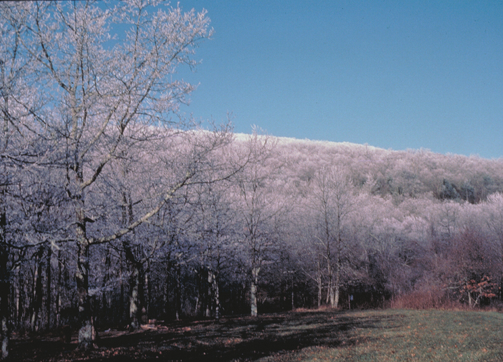 Trees laden with frost glitter faintly purple.