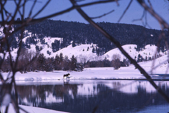 A moose roams the far shore of a icy winter lake, framed by a majestic sweep of mountains in the background.