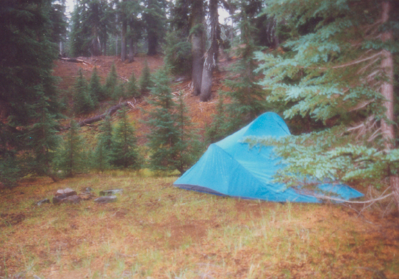 A bright blue tent is set up in a clearing, behind which is a line of young trees.