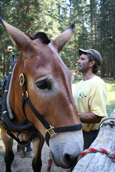 Packer Pete Armichardy and a close-up of Izzy the mule at Moose Creek Ranger Station.