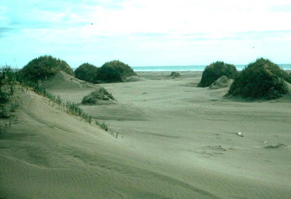 Grass makes its home on top of several sand dunes on the beach area of the Nunivak Wilderness.