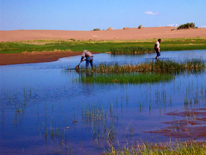 Two researchers wade through a small wetland with nets.