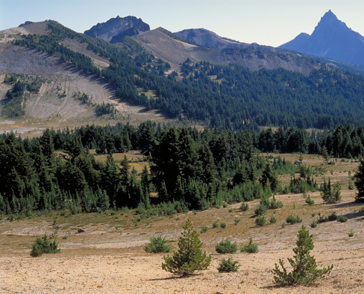 A golden grassed valley meets forested slopes and grandiose peaks.