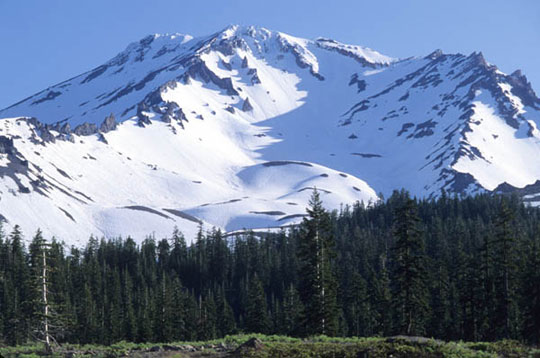 Mount Shasta is blankted with snow while trees concentrate in many numbers at the base of the mountain.