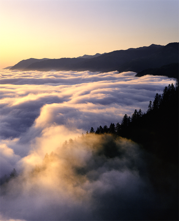 The fog is painted gold and purple by the light of a dying sun.  A single silhouetted ridge of trees can be seen, and beyond the mountains simply fade into the coastal mist.