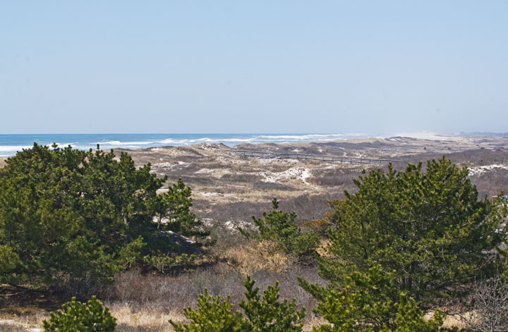 Green bushes frame the shot, where beyond the dusky brown of the dunes is prevalent.  Still farther is the blue expanse of the Atlantic Ocean.