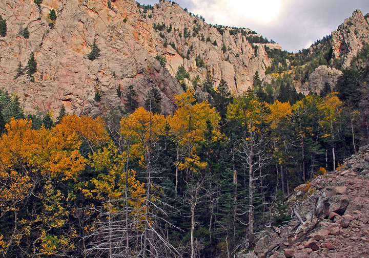 A shot of the side of a canyon wall during sunset captures the yellowing tree tops.