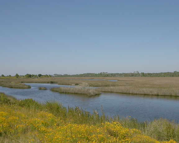 Yellow flowers flourish on the near bank of a river; the far bank is covered in golden grasses.