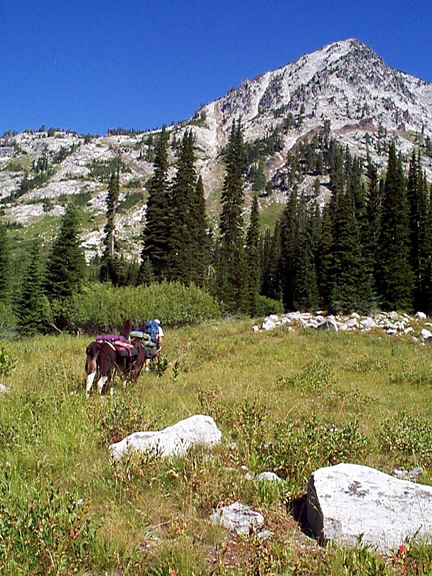 A man leads two llamas through a lush meadow valley.  Beyond him rises a sheer mountain, dotted with pines and cliff faces.