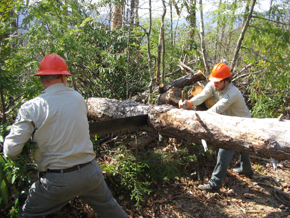 Two men in bright orange construction hats work to clear a tree off of a trail using a two-man traditional crosscut saw.