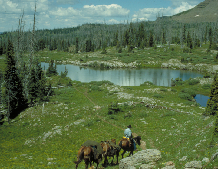 A small pack string weaves its way down a path towards a lake in the center of a green meadow.
