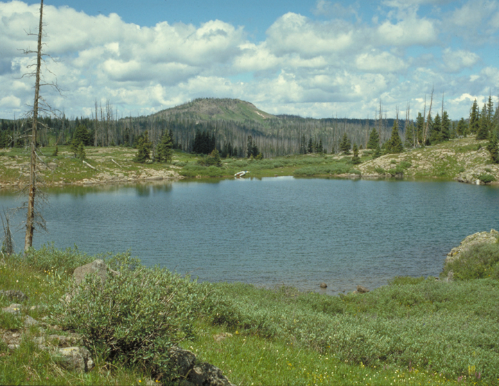 A lake is the focus here, surrounded by tall green grasses and burnt trees.