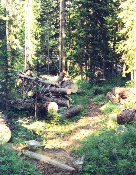 Cur fallen trees in the Gospel-Hump Wilderness.