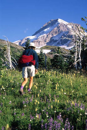 A hiker heads toward Mt. Hood, walking through a lush meadow that is dotted with wildflowers.