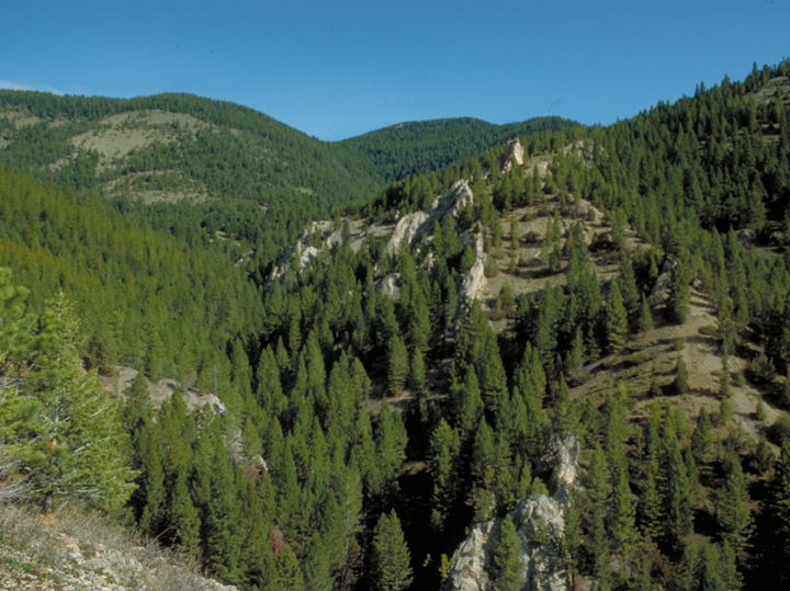 A sharp featured valley is softened by tall green pines.