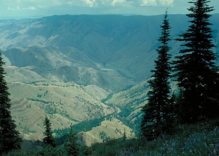 A few dark pines frame the shot of a valley far below.