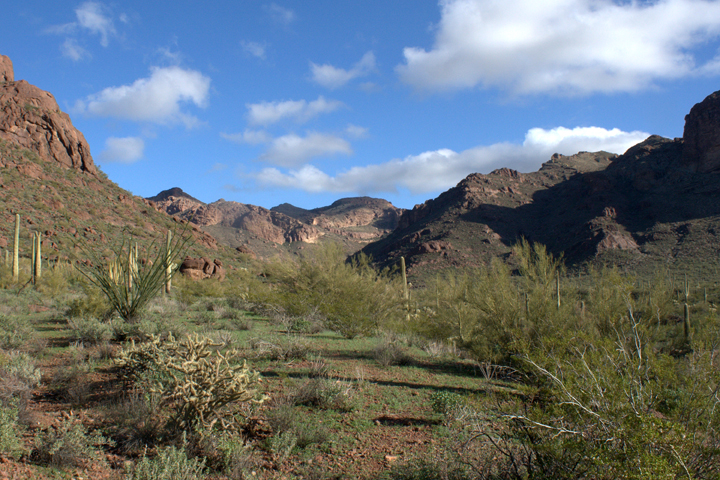A desert valley is painted in reds and sage greens.
