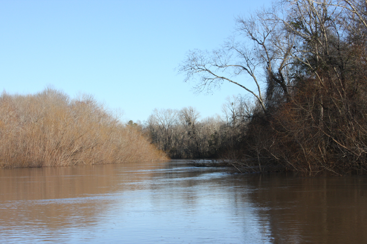 The river is brown, much like the trees and brush that line its banks.