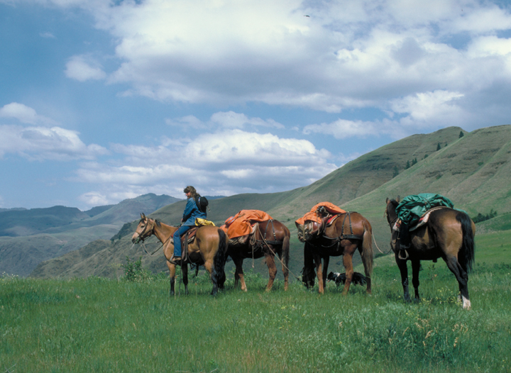 Three laden pack horses trail behind a figure on horseback. They stand on a grassy ridge under a beautiful blue sky.