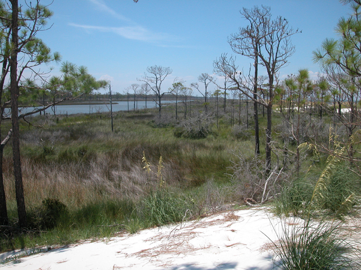 A slow moving river is in the background; a sandy hill in the foreground.  The middle is dominated by grasses.