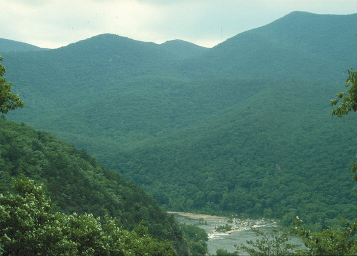 The forest is massive, dominating the wide hills and almost obscuring the river weaving through the area.