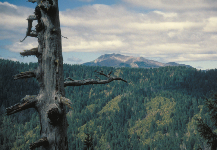 A dead tree comands the attention of the viewer, filling the left side of the frame.  Beyond is a forested hill and still farther is a mountain.