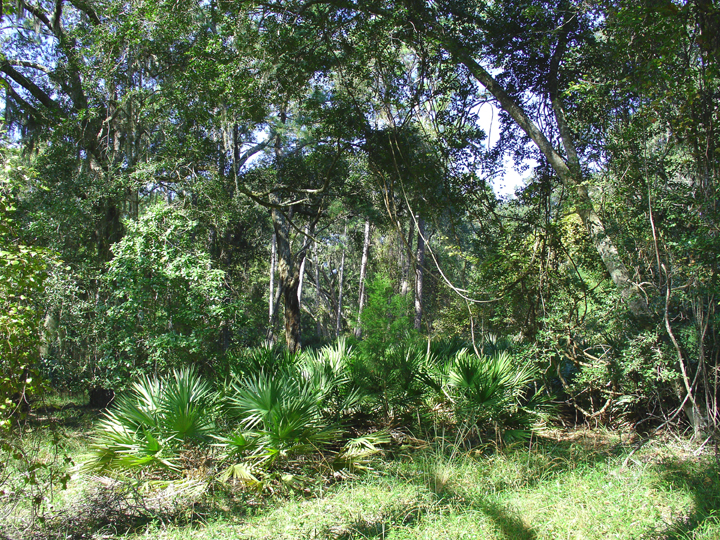 The forest is exploding with green ferns, hanging vines and leaning trees.