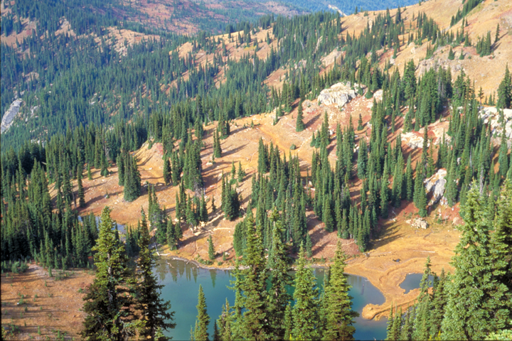 A lake can be seen at the bottom of a tree littered valley.
