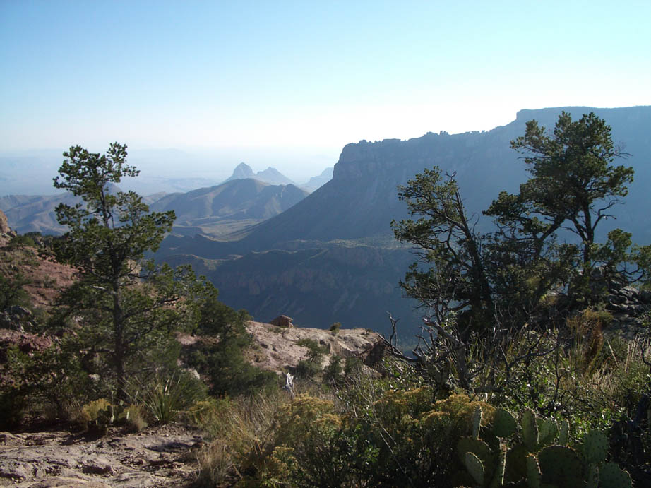 Viewing through a border of small trees, brush, and cactus, to a deep ravine bordered by high rocky cliffs in the near distance.