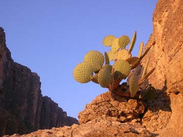 A close-up of a cactus bathed in warm evening light, with shadowed rock faces in the background.