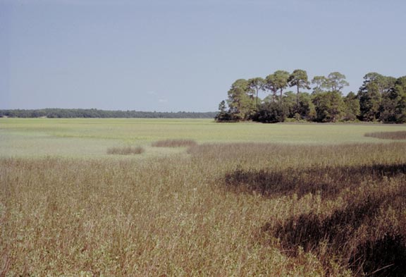 A massive expanse of marshy grassland, bordered by tall forest.