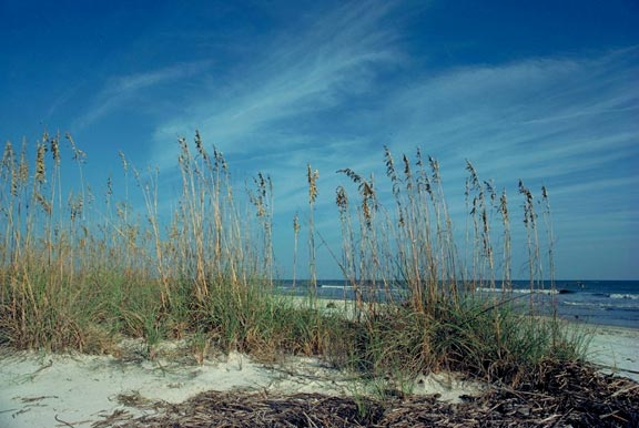 A small cluster of green grass growing along the sandy beach, with wispy white clouds high above.