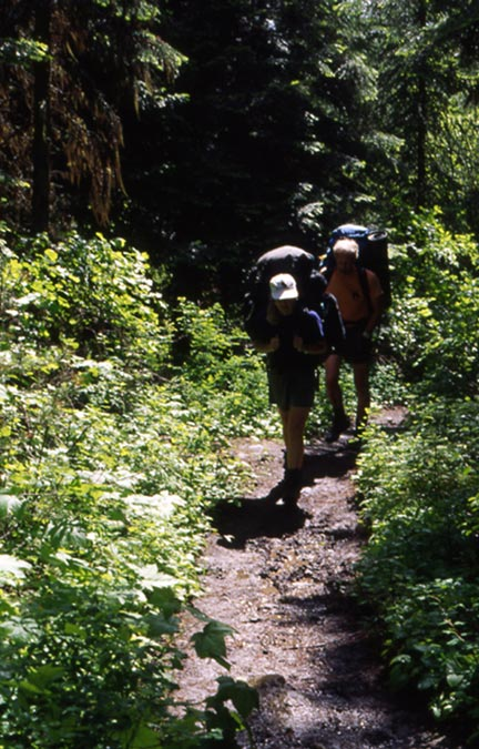 Two backpackers hiking along a narrow path through the forest, bordered by dense green undergrowth.