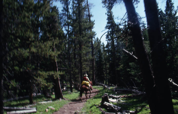 A lone person on horseback, traveling along a narrow path surrounded by tall open forest.