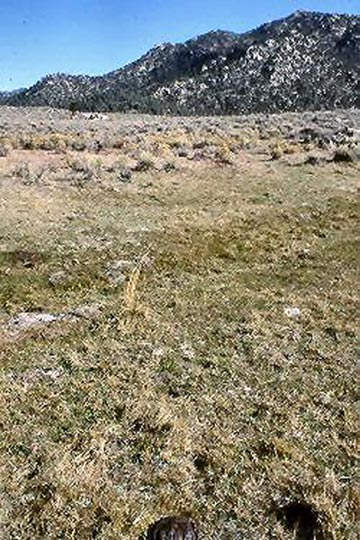 A desolate grassland, stretching away to a high hill, dotted with rocky outcroppings.