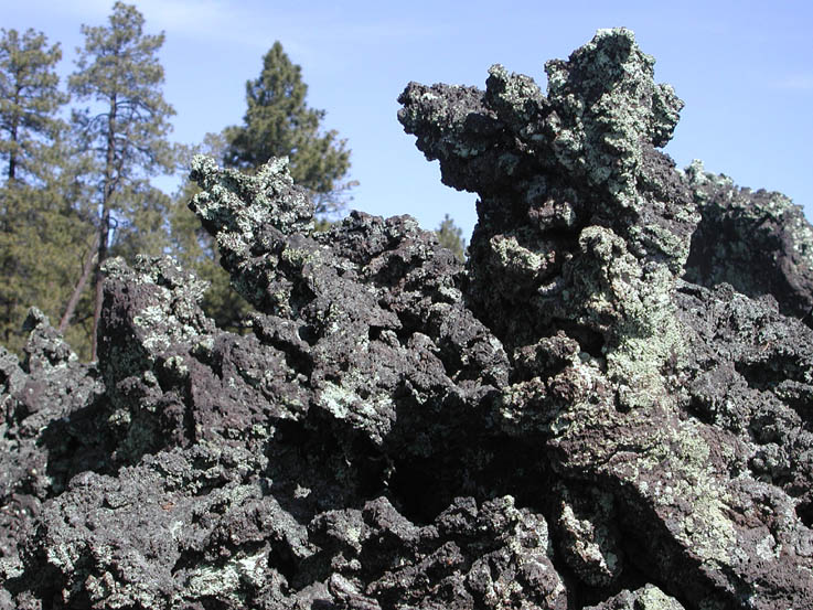 A close-up of textured volcanic rock, with tall forest trees in the background.