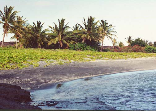 A black sand beach bordered by low green foliage in the foreground, and large palm trees behind.