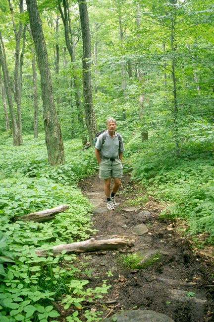A man hiking along a narrow trail, bordered by lush green forest undergrowth.
