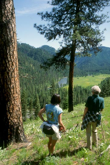 Two women standing next to the trunk of a large pine, looking down over a meadow in the forest valley below.