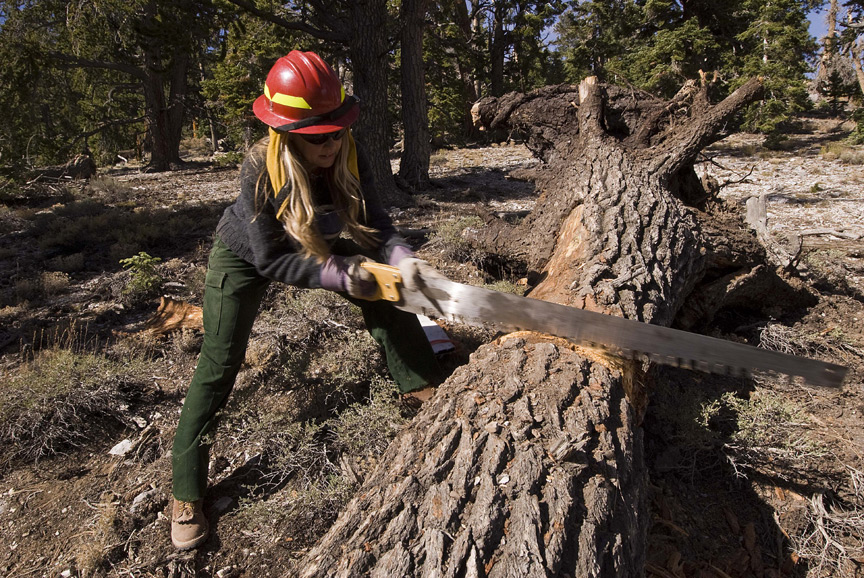 Woman in a red hard hat uses a saw to cut through a fallen tree in the Mt. Charleston Wilderness.