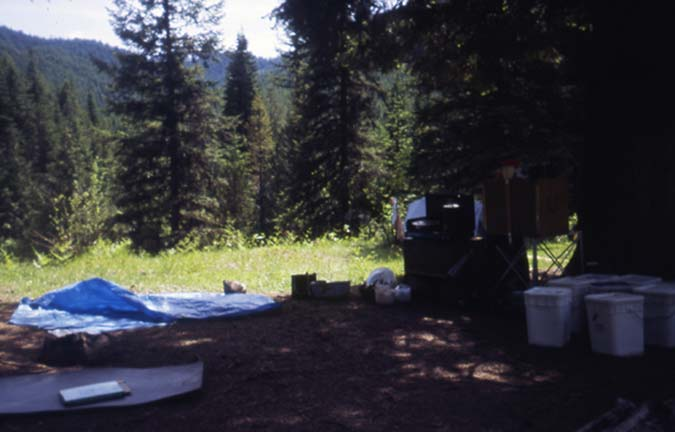 An open campsite in the shade of several trees, along the edge of a meadow.