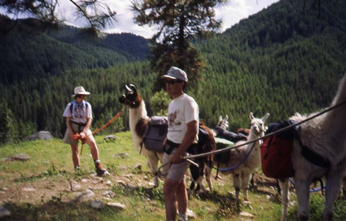 Two people standing near a small group of tethered llamas, with a large forested valley in the background.
