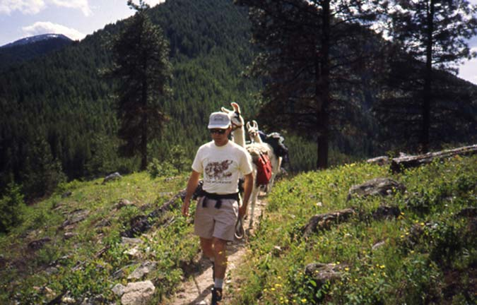A man in shorts and a white shirt, leading two llamas down a narrow trail through a small meadow.