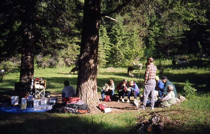 A small group of people and their equipment, gathered near the base of a large tree on the edge of a small meadow.