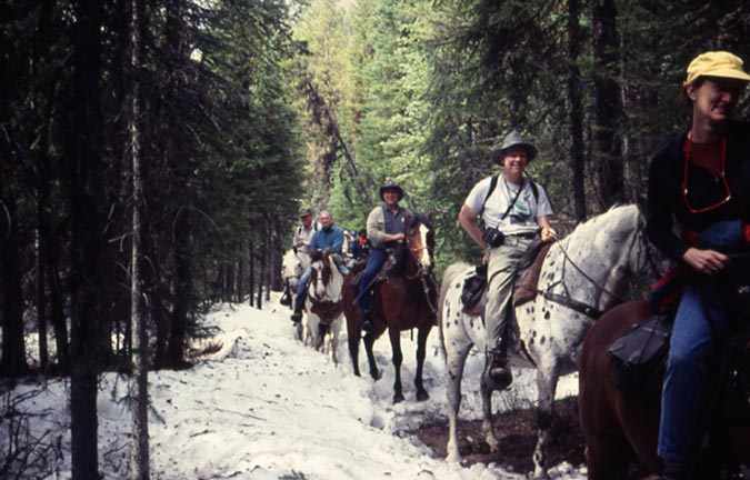 A large string of horses and riders along a forest trail, surrounded by dirty white snow and tall trees.