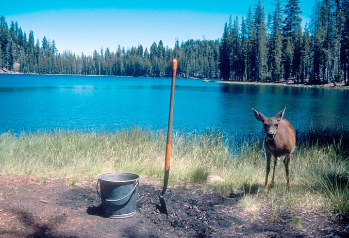 A young deer standing near the edge of a small lake, next to a shovel and bucket on the ground.