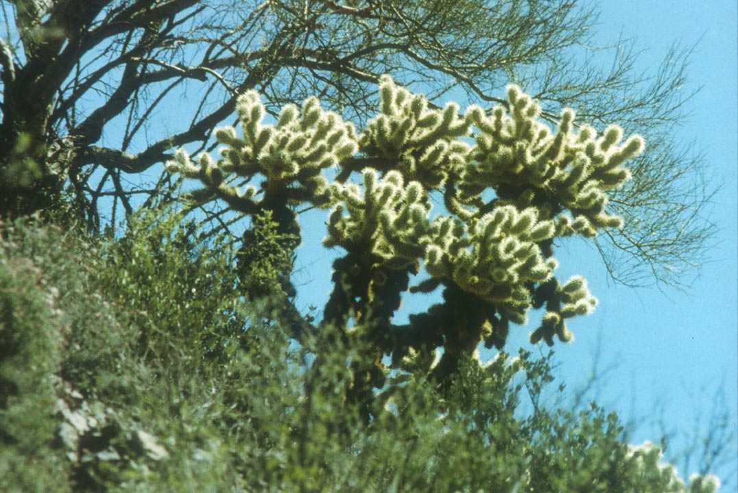 A fuzzy cactus along the edge of a ridge, standing out against the blue sky beyond.