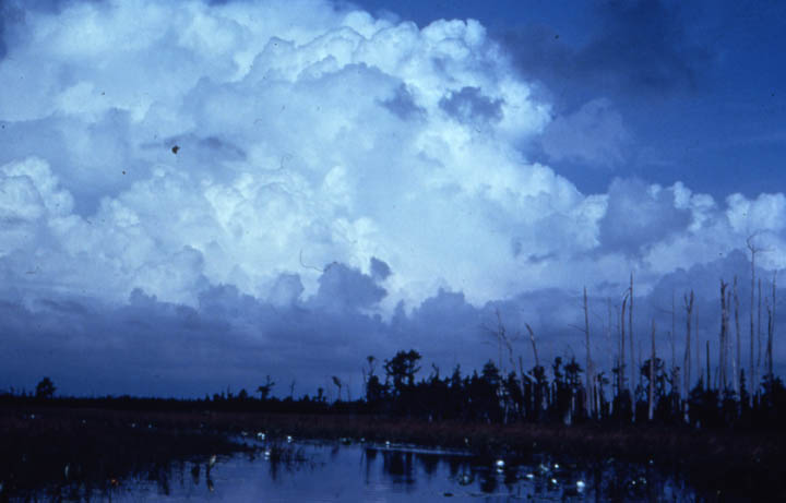 Massive billowing cumulous clouds rising high into the blue sky, towering over the narrow swamp channel in the foreground.