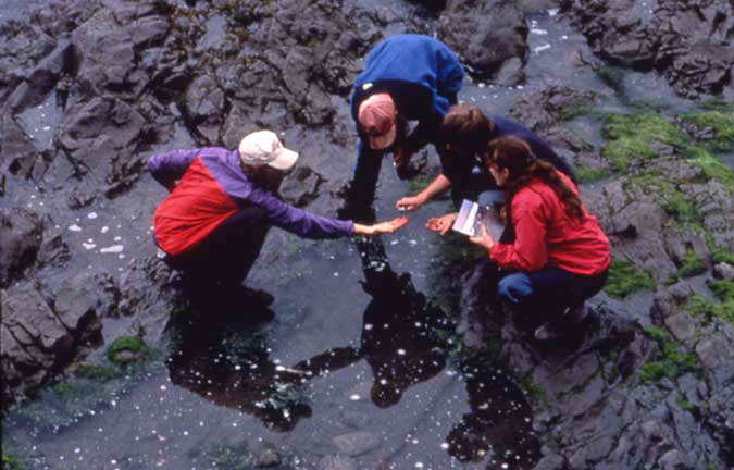 Three people in bright red and blue jackets, examining samples in a small tide pool along the coast.
